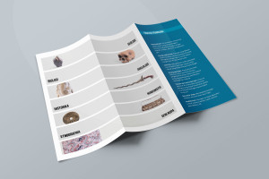Desain Brosur Museum Ranggawarsita-Semarang-blue Tri Fold Brochure Mock-up 2