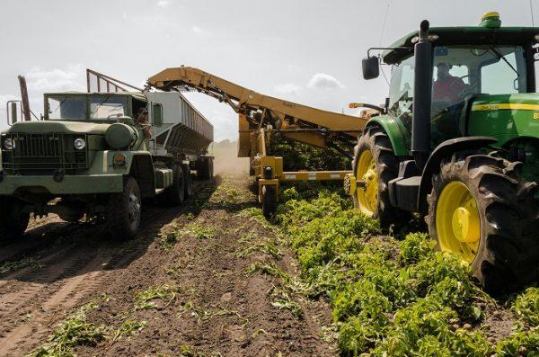 jasa pembuatan company profile perusahaan pertanian